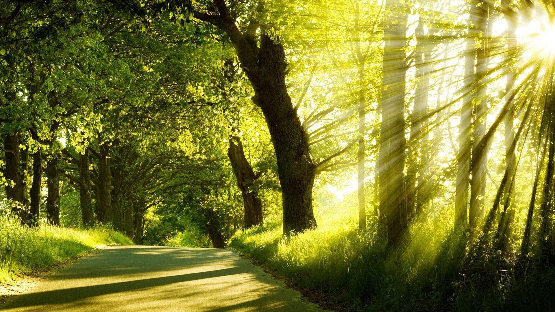 壁纸 风景 森林 桌面 1920_1080图片